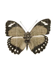 бабочка