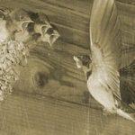 Ласточка свила гнездо под крышей дома