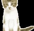 Подобрать котенка с улицы – приметы