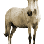 Приметы про лошадь