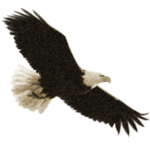 Увидеть орла – приметы