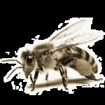 Пчелы прячутся в улей – примета