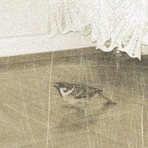 птица в доме