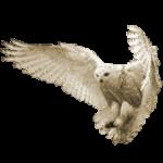 Увидеть сову – примета