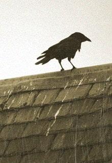 ворона сидит на крыше