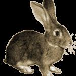 Увидеть зайца – примета