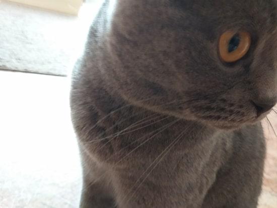 усы кота